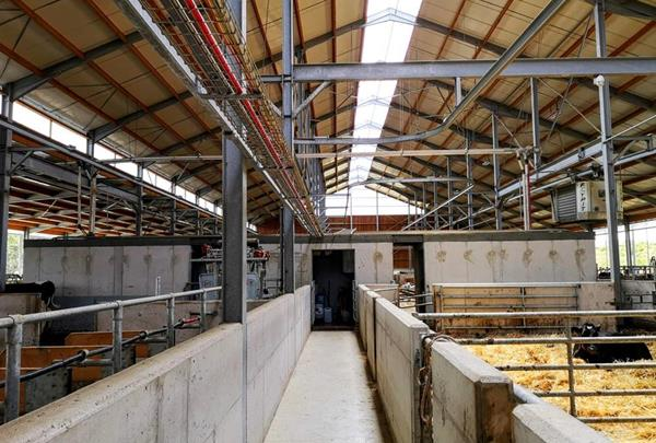 View on the milking chamber