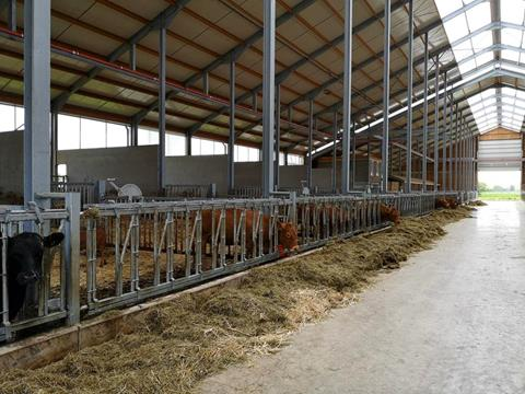 Feeding area of the farm building with sufficient fodder