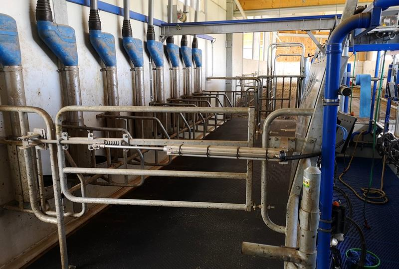 Part of a milking parlour in a resettlment